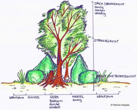 Zeichnung einer Hecke mit Beschriftung der Pflanzen- und Vegetationnsschichten