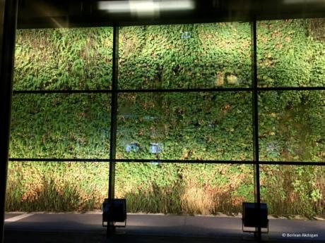 eine Pflanzenwand