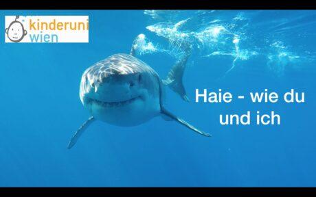 """ein schwimmender Hai. Text: """"Haie - wie du und ich"""""""