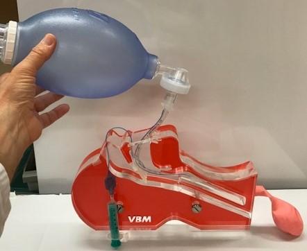 Intubation wird anhand eines Kopfmodells gezeigt
