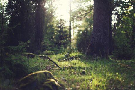 ein Waldboden