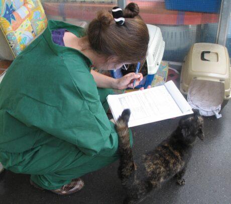 Veterinärmedizinerin Christine Arhant füllt ein Formular aus, daneben eine Katze und ihre Transportbox