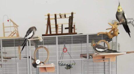 ein Vogelkäfig mit drei Vögeln und vielen Gegenständen