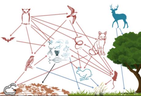 schematische Darstellung eines Ökosystems