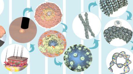 Collage aus Bildern der Zelle in immer stärkerer Vergrößerung, von den Hautschichten bis zur DNA