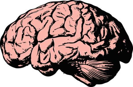 ein gezeichnetes Gehirn