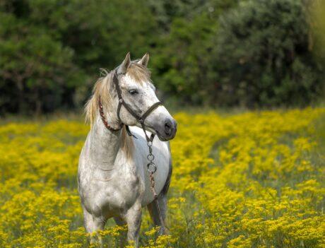 ein Pferd auf einer Blumenwiese