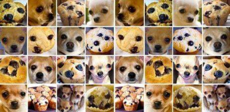 Viele Fotos auf denen je ein Heidelbeermuffin oder ein Hund zu sehen ist. Aufgrund der dunklen Augen und Schnauze, sowie der Fellfarbe des Hundes sieht das Bild ähnlich wie der Muffin aus.