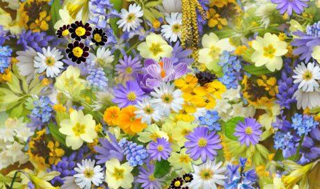 viele Frühlingsblumen