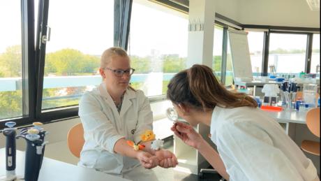 Zwei Forscherinnen im Labor. Eine hat Plüschtiere auf den Händen, die andere beobachtet sie mit einer Lupe.