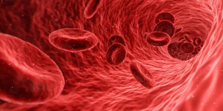 Rote Blutkörperchen im Blutkreislauf