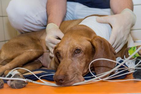 Ein*e Veterinärmediziner*in untersucht einen Hund