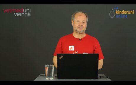 Screenshot vom Lievstream der Lehrveranstaltung